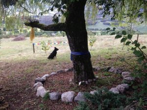 Peace Willow (front), with Peace(?)Dog Che and the Four Cherry Trees