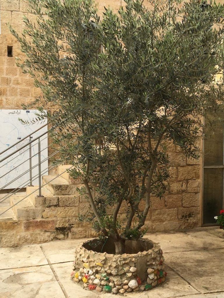 2018 11 29 Ramallah Tamer Institute Workshop Olive Tree